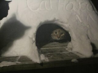 Cathouse for rent. Cheap!