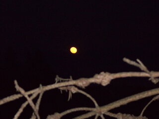 harvest moon in May