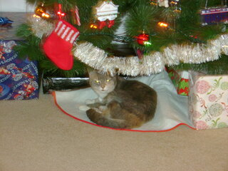 Kitty & her stocking, waiting for Santa