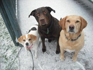 My 3 Dogs