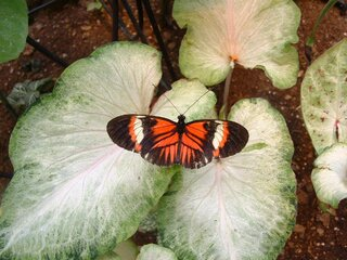 Butterfly Conservatory in Oneonta, NY