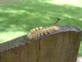 Interesting looking Caterpillar
