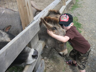 Giving The Donkeys Some Love!