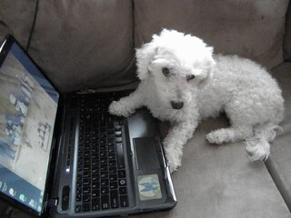 Harley wants his own Facebook Account