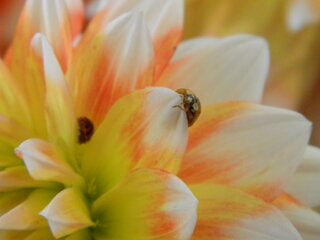 Lady Bug On Flowers