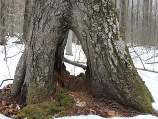 Peek-A-Boo Tree