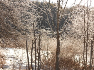 Chilly morning pretty ice on trees