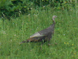Turkey in June!