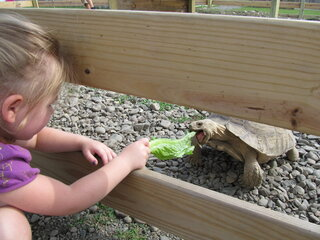 Little Maddy Feeds the Baby Tortoise
