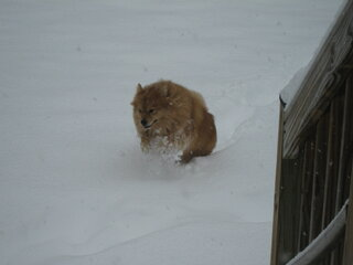 Pets and snow.