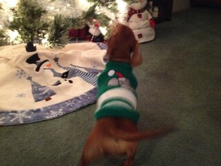 Sadie in her ugly sweater