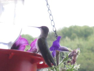 Hummingbirds - Love them!