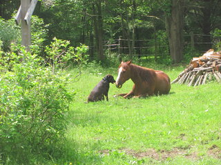 Dog is horse's best friend!