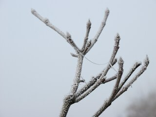 Heavy Frost This Morning 11/18/2012