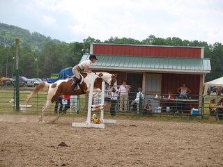 horse Show up to brookfeild Ny
