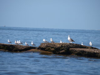 some brids at the beach