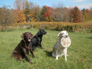 Beautiful Fall Day and Beautiful Dogs