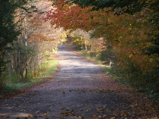 Autumn Road In Coventry