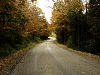 Back roads have the best leaves