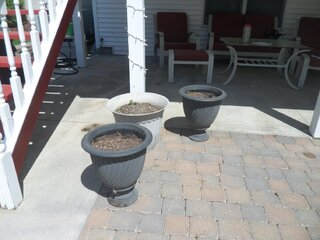 THE FLOWERLESS POTS.....PLEASE HELP!