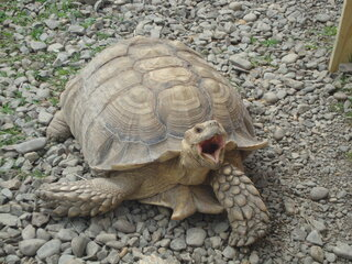 Happy Tortoise!!