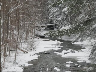 Winter Covered Creek