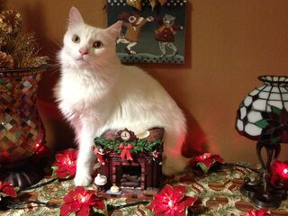 Bingo thinks he is a decoration too!
