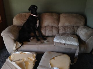 Dog =1, couch =0