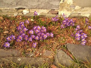 First promise of Spring!