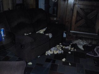 The couch just exploded, I swear.