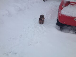 Every time it snows,Kalvin can't resist!