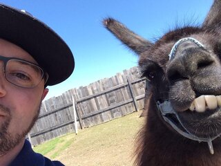 But first, llama take a selfie.