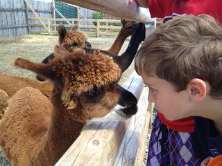 Seeing eye to eye with the Alpaca