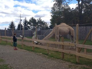 Mav and the Camel!