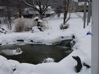 Pond in winter