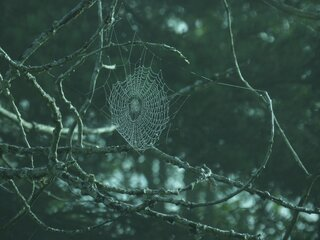 Spiderwebs and dew drops