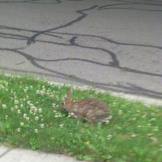 bunny in our yard