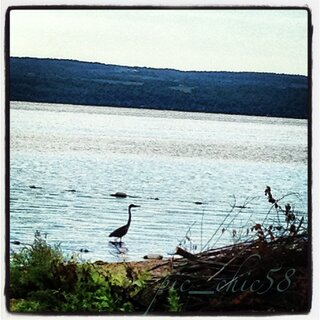 Beauty at Seneca Lake