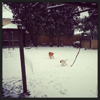 At least they are enjoying the snow!