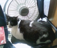Gizmo keeping cool