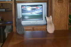 waiting for  Daytona 500 2008