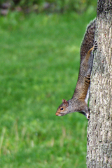 Squirrel gets different view of World