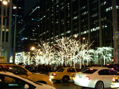 City Lights up for Christmas