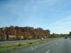 Head South - Find Fall Again!!