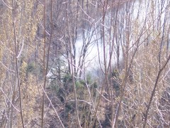 Brush Fire in East Branch