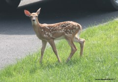 Bambi is in Town!
