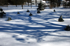 Evening Shadows on New Snow