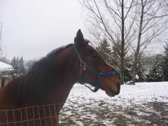 our horses playing in the snow
