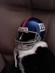 NY Giants Fan