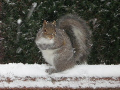 Backyard Critter in the Snow Storm